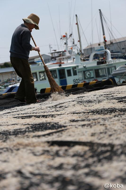 しらす天日干しの作業 竹ぼうきで掃く姿 用宗漁港│こばフォトブログ@koba