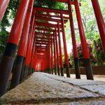 根津神社 朝の散歩