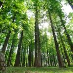 水元公園 「メタセコイアの森」 5月