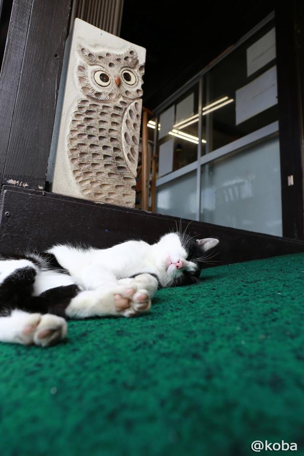22 爆睡中のネコ