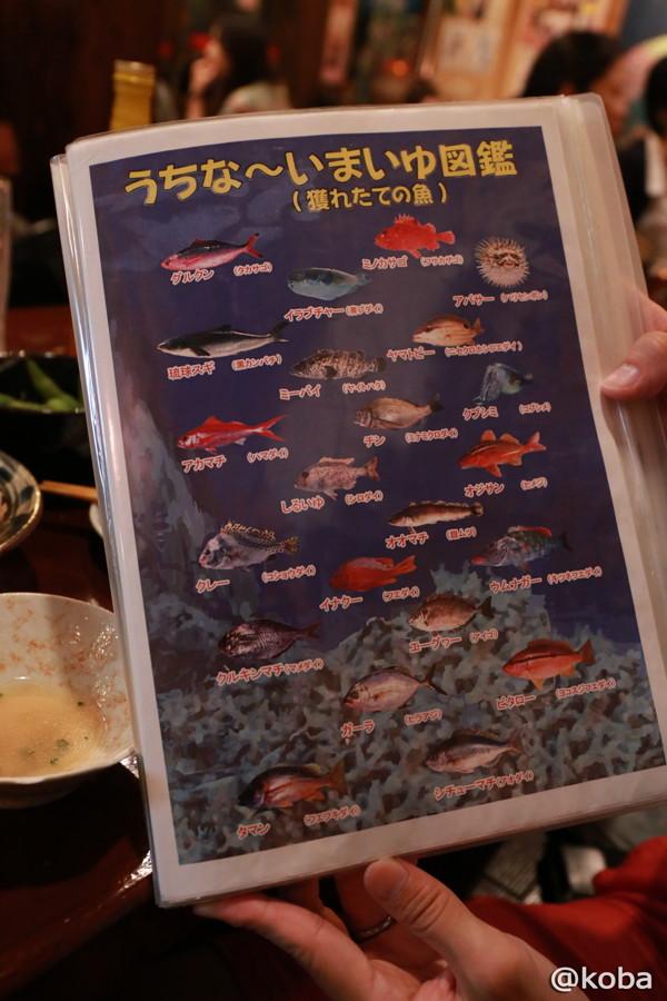 16 魚図鑑
