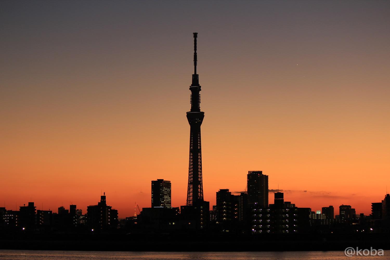 「スカイツリーと小さく東京タワー」 四ツ木 こばフォトブログ