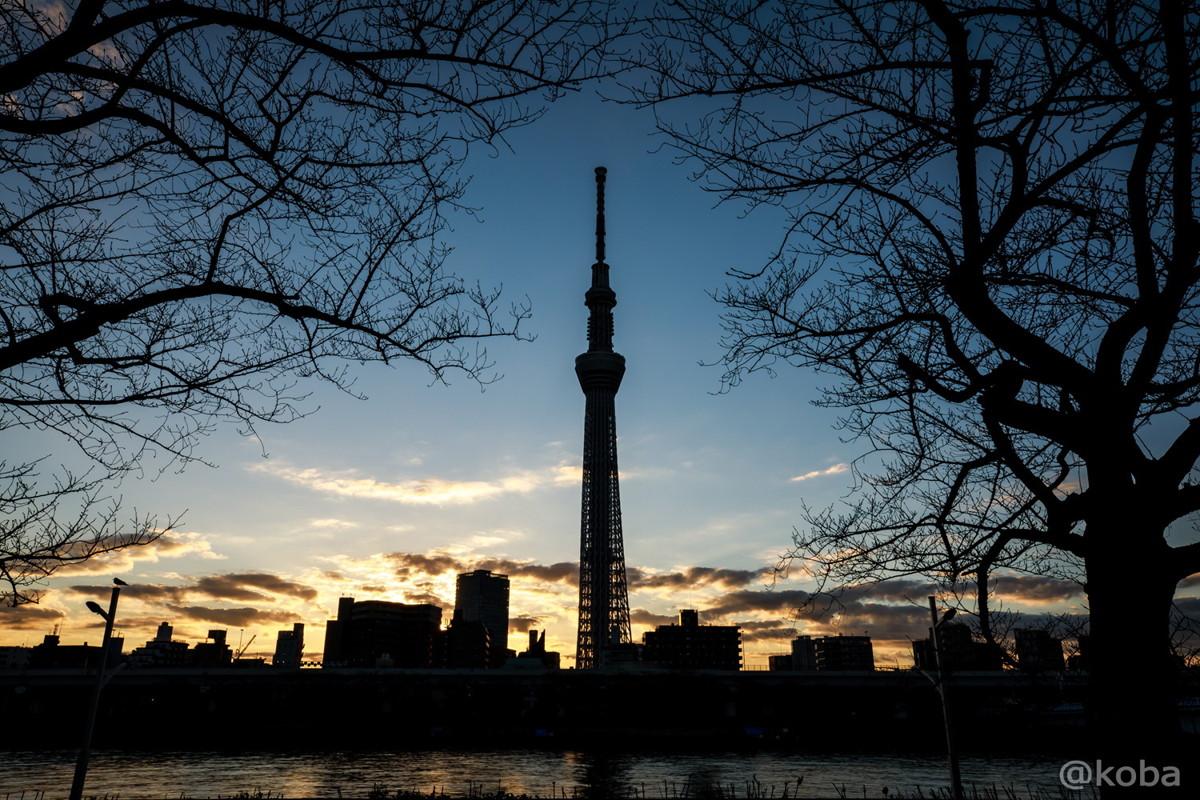 モーニング・スカイツリー 朝焼け 東京都台東区