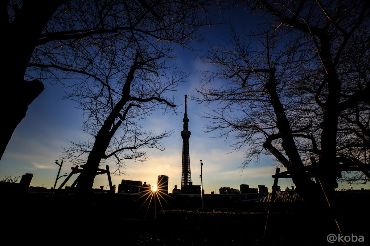 桜の木とスカイツリーのシルエット&日の出 隅田川│こばフォトブログ