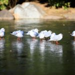 「氷上の鳥」東京 隅田公園(墨田側)