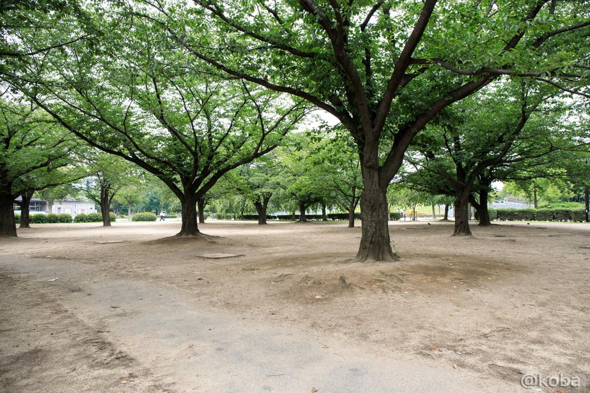 バーベキュー広場 桜の木の写真│施設の写真│木場公園 ベキュー広場 住所 東京都江東区
