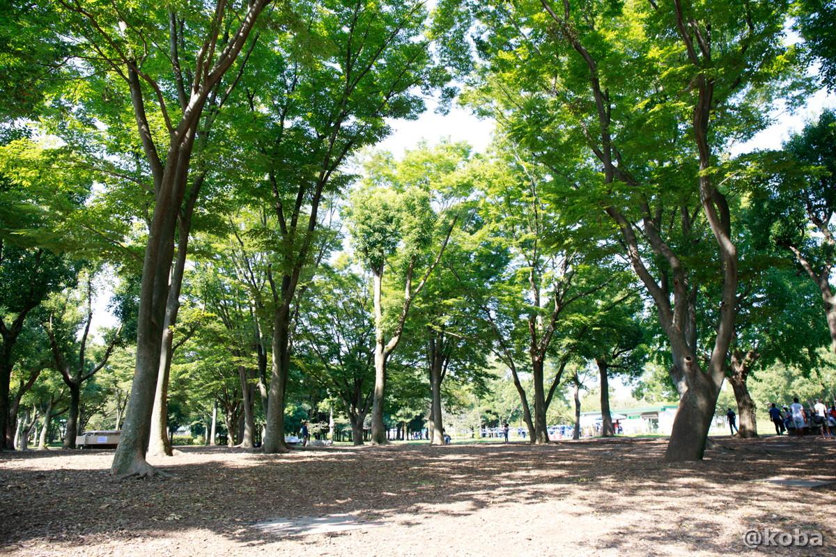 木漏れ日が心地よい バーベキュー広場 │水元公園│こばフォトブログ@koba