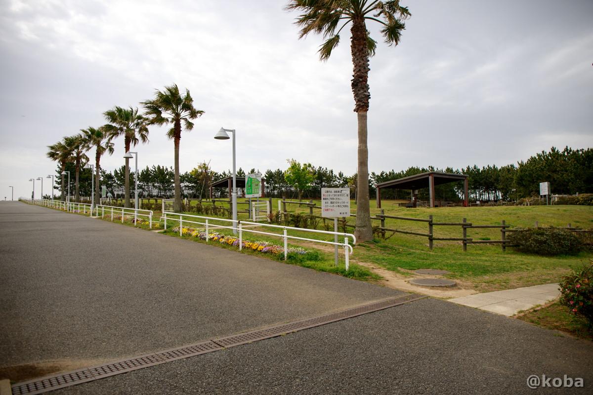 ディキャンプ場 正面通路側の写真│浦安総合公園│こばフォトブログ@koba