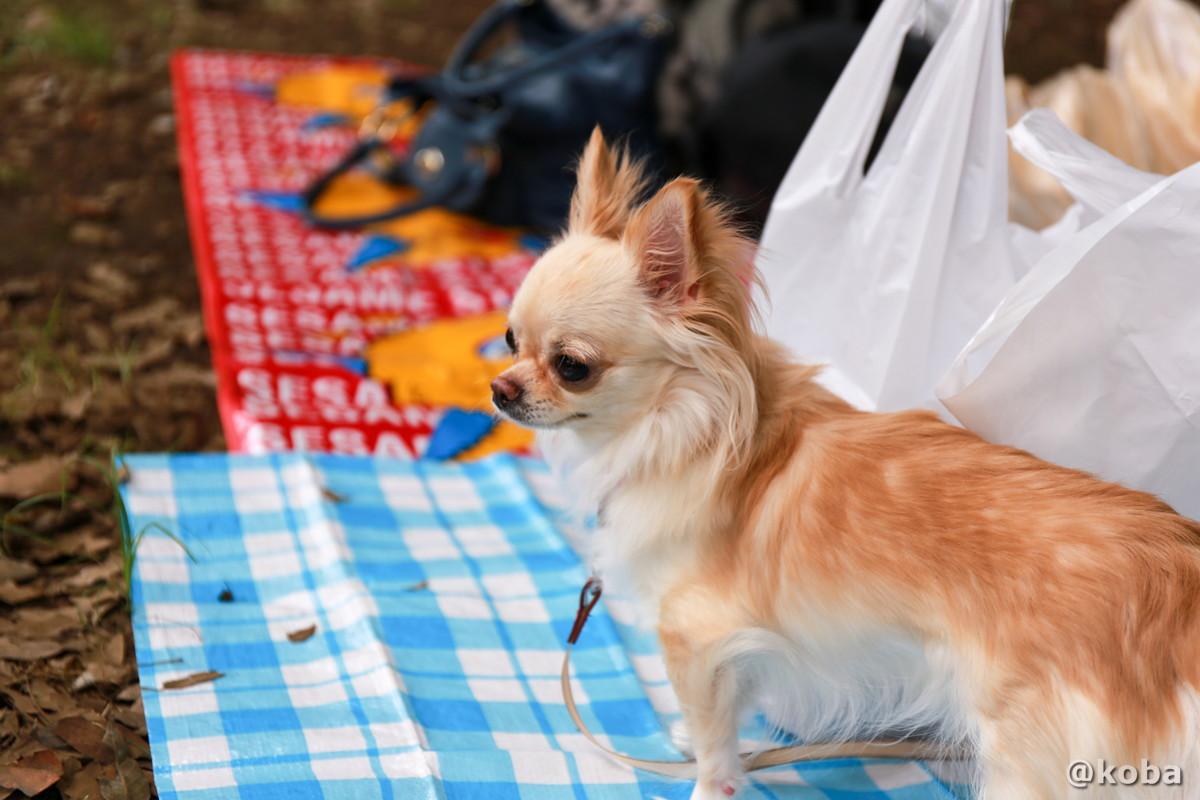 リードをつけていればペット同伴可 バーベキュー広場 │水元公園│こばフォトブログ@koba