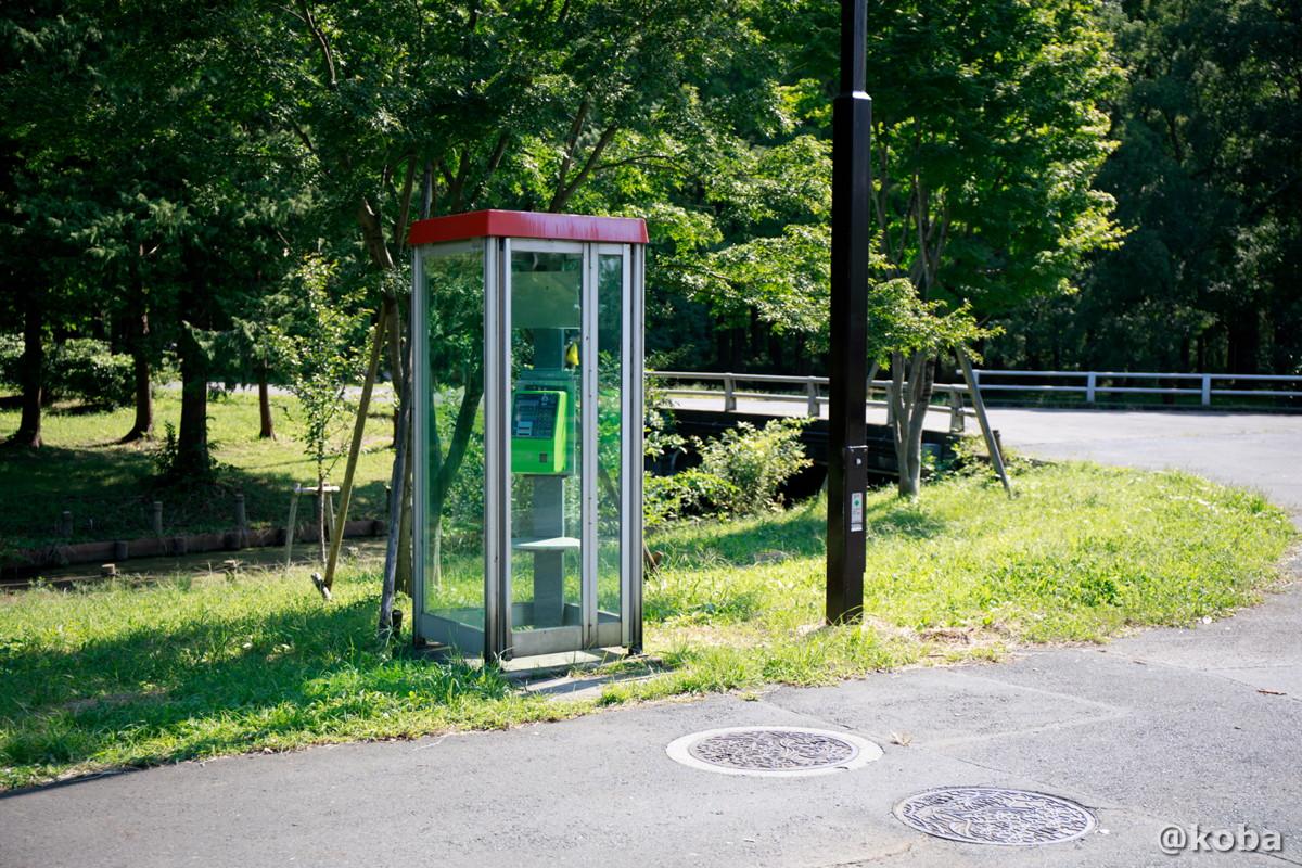 緑の公衆電話ボックス │水元公園│こばフォトブログ@koba