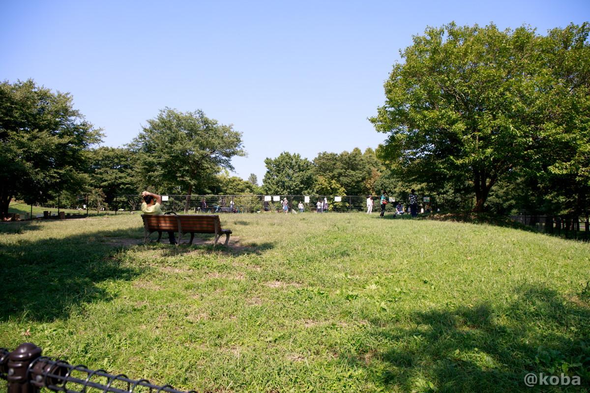 ドックラン外側の広場│水元公園│こばフォトブログ@koba