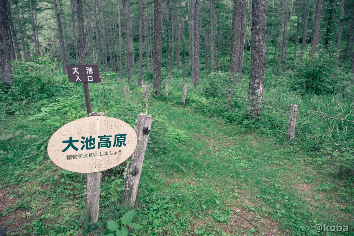 入り口の写真 伝説の大池(でんせつのおおいけ) 長野県下伊那郡大鹿村鹿塩 ブログ画像