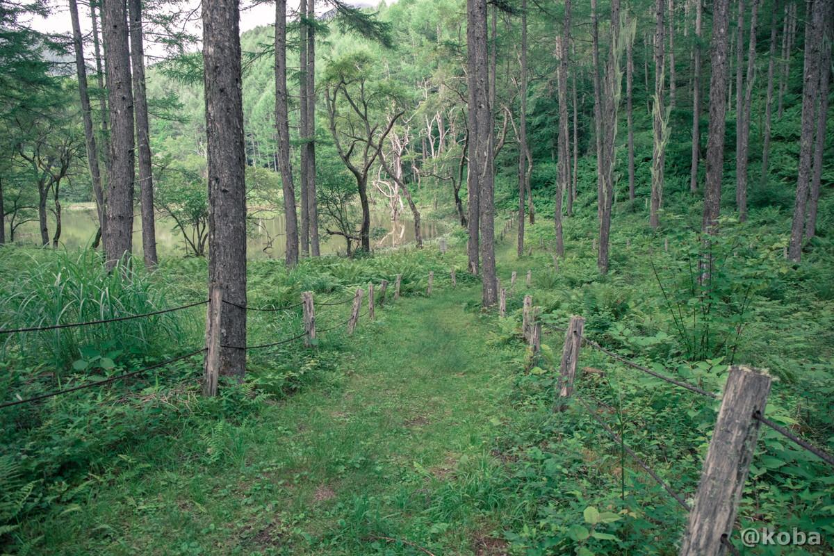 遊歩道 坂道 伝説の大池(でんせつのおおいけ) 長野県下伊那郡大鹿村鹿塩 ブログ画像