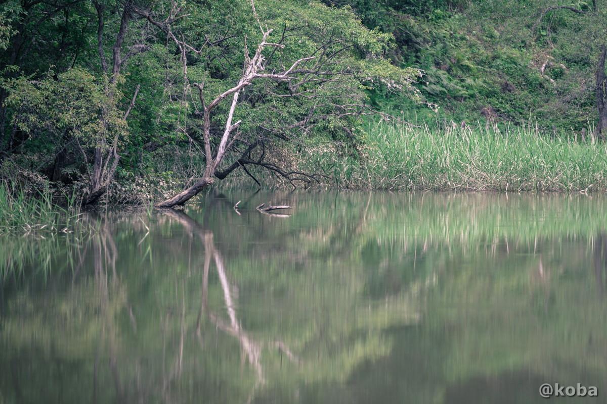 池の写真 伝説の大池(でんせつのおおいけ) 長野県下伊那郡大鹿村鹿塩 ブログ画像