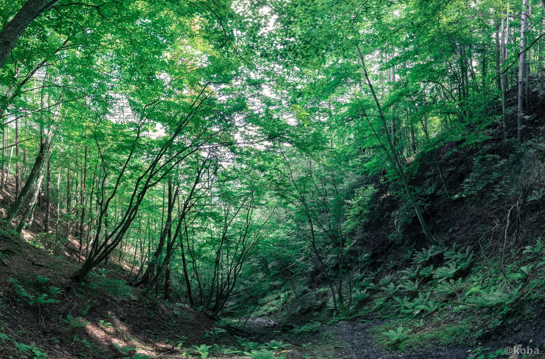 森林の写真 ゼロ磁場 分抗峠 長野県 伊那市 ブログ