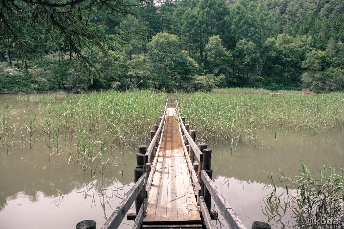 池の中央に向かう橋 伝説の大池(でんせつのおおいけ) 長野県下伊那郡大鹿村鹿塩 ブログ画像