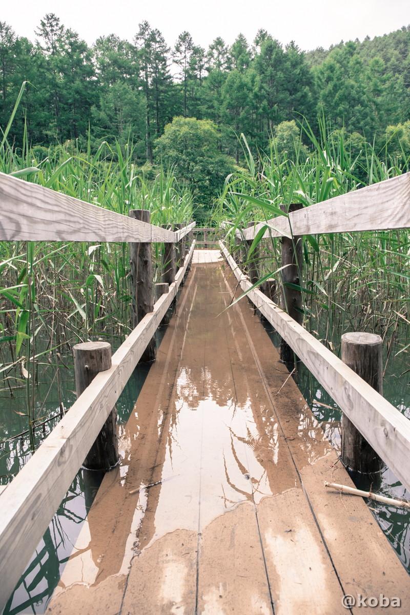 雨の日が続いた影響か、そもそも沈下してたのか、 池の中央に向かう橋は途中で浸水していました。 伝説の大池(でんせつのおおいけ) 長野県下伊那郡大鹿村鹿塩 ブログ画像