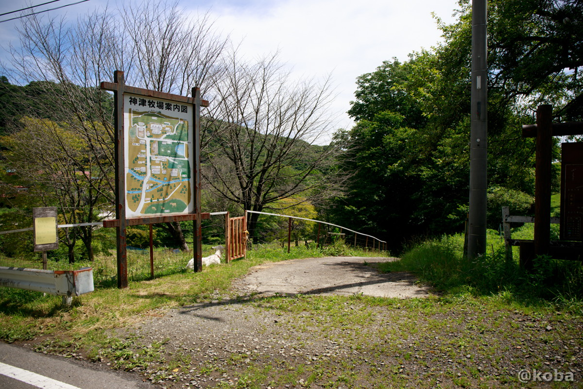 案内看板とヤギ 神津牧場(こうづぼくじょう)群馬県