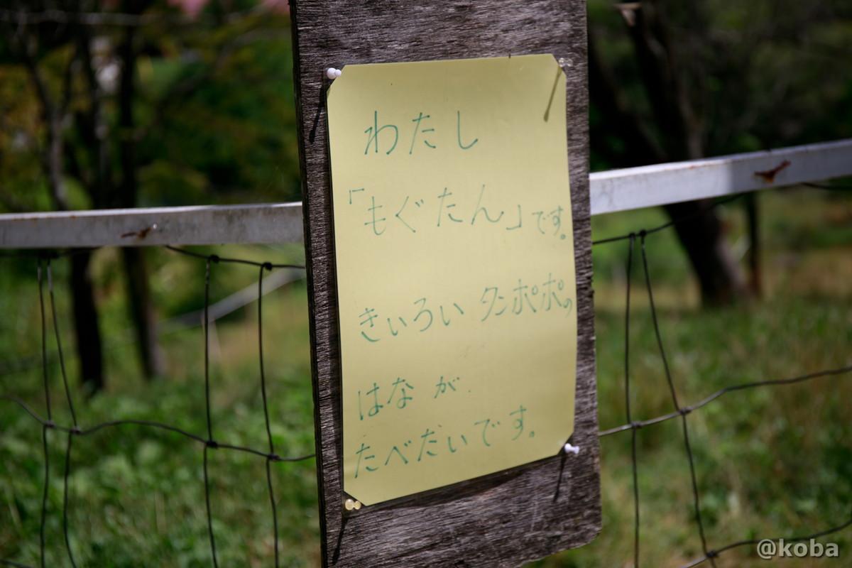 わたし「もぐたん」です。黄色いタンポポの花が食べたいです。 神津牧場(こうづぼくじょう)群馬県
