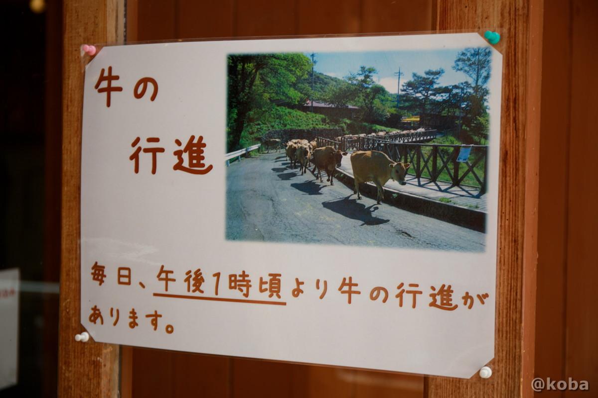 毎日、午後1時頃より牛の行進があります。 神津牧場(こうづぼくじょう)群馬県