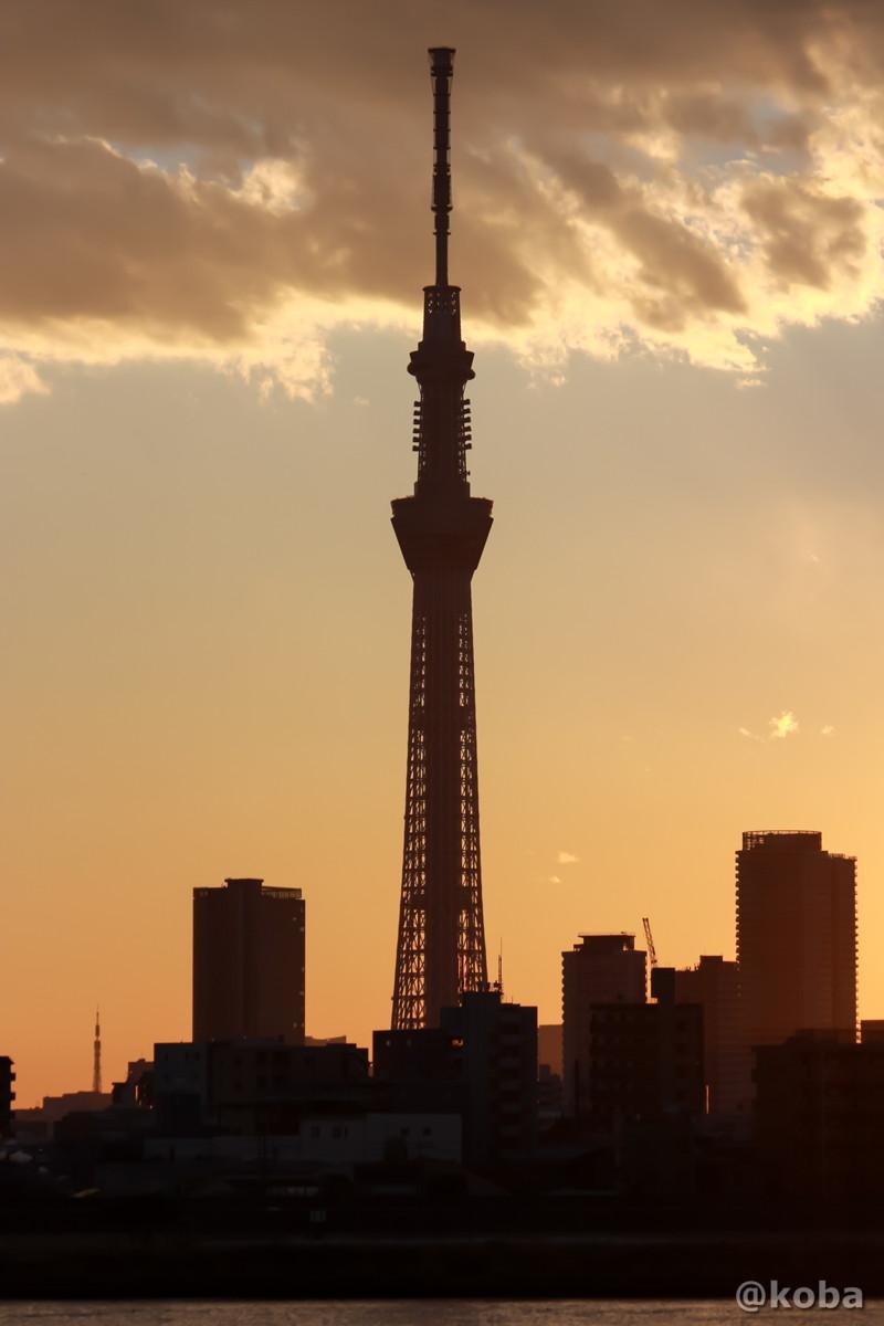 四つ木 東京スカイツリー 夕方