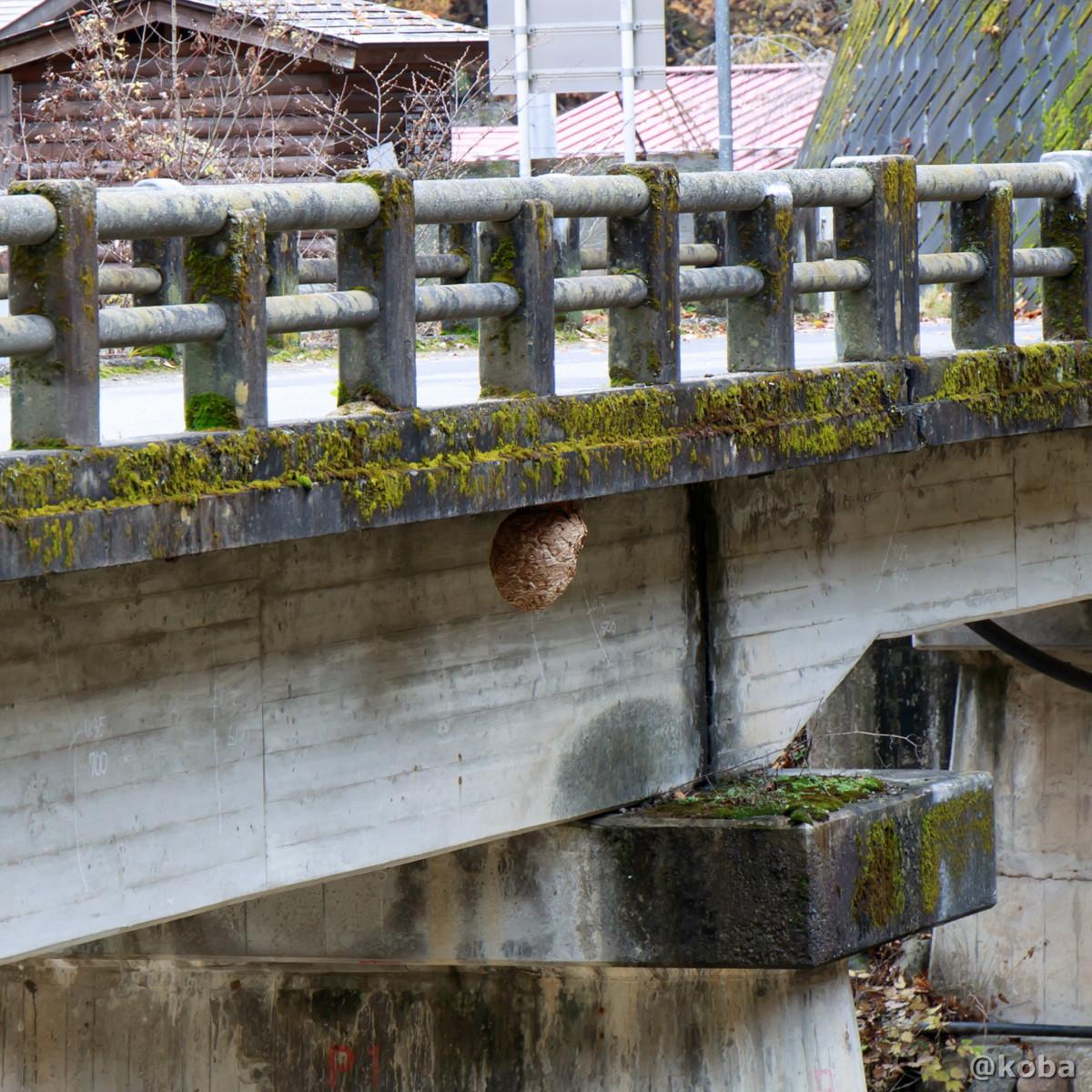 橋の下にハチの巣があります。 ご注意ください!の写真│尻焼温泉(しりやきおんせん)川の湯 日帰り入浴│群馬県 ブログ