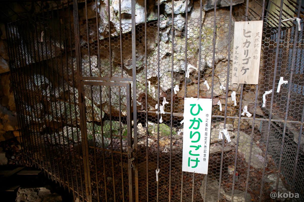 ヒカリゴケ看板の写真│大岩不動尊(おおいわふどうそん)│群馬県 ブログ