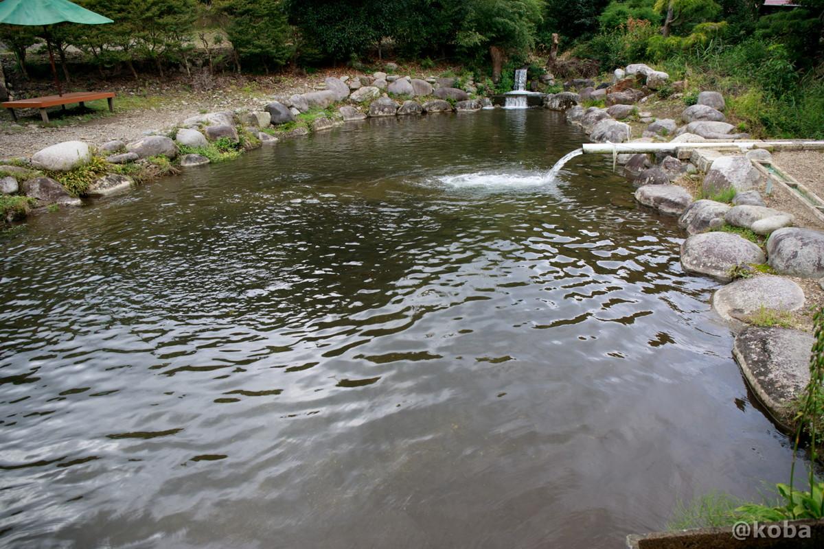 小さなマスが居る池の写真|古戸中養魚場(ことちゅうようぎょじょう)|釣堀・虹マス釣り|栃木県