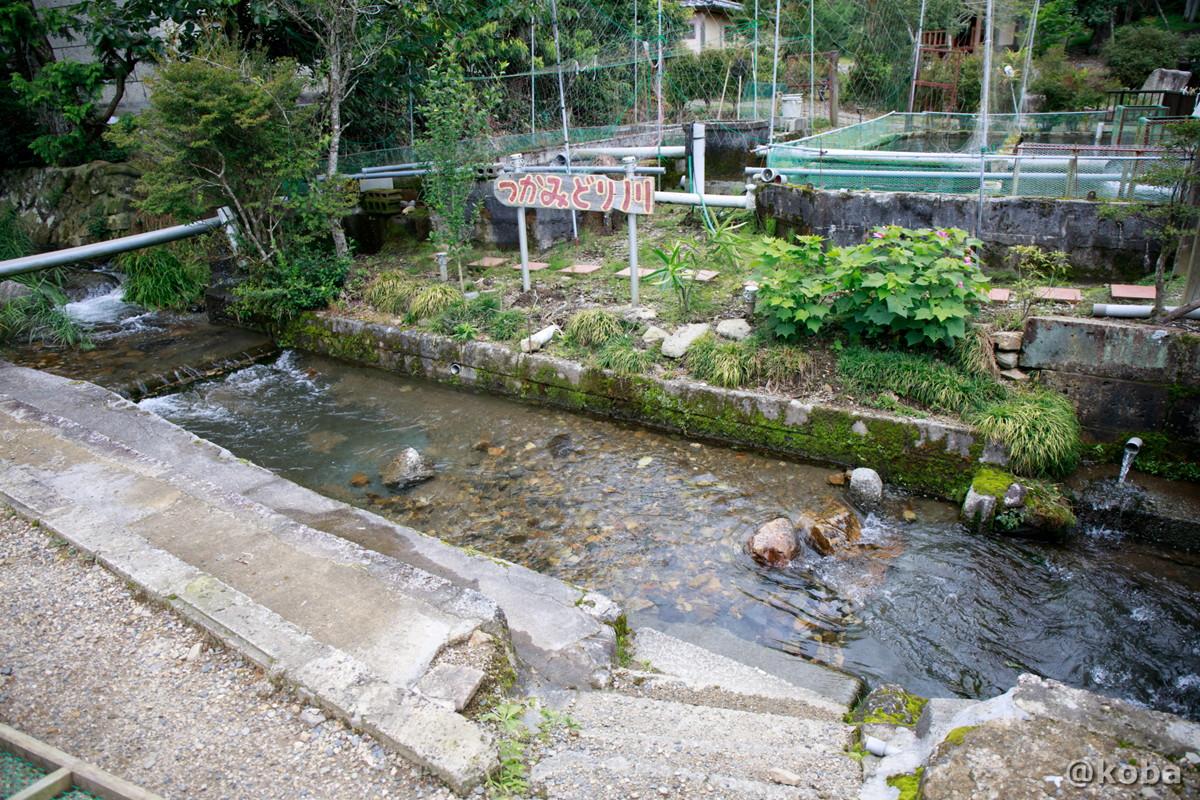 つかみ取り川エリアの写真|古戸中養魚場(ことちゅうようぎょじょう)|釣堀・虹マス釣り|栃木県