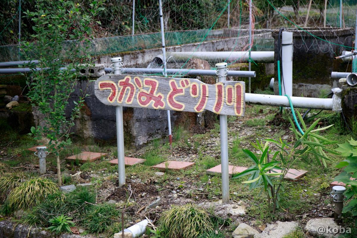 つかみ取り川の写真|古戸中養魚場(ことちゅうようぎょじょう)|釣堀・虹マス釣り|栃木県