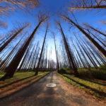 [360]水元公園「冬のメタセコイアの森」1月