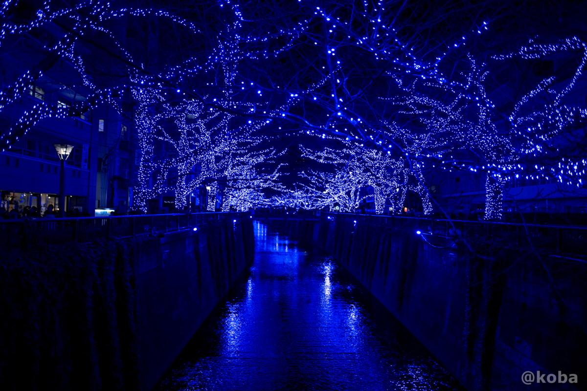 青の洞窟 2014年 目黒川|EOS 6D|東京都目黒区青葉台|こばフォトブログ