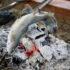 釣ったマスを炭火で焼いている写真|古戸中養魚場(ことちゅうようぎょじょう)|釣堀・虹マス釣り|栃木県